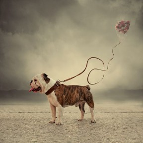 Caras Ionut Photography - 002