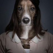 funny-portraits-of-dogs-dressed-like-humans-L-9zxcdR