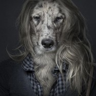 funny-portraits-of-dogs-dressed-like-humans-L-SW76tB