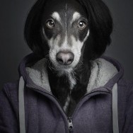 funny-portraits-of-dogs-dressed-like-humans-L-VJH98e