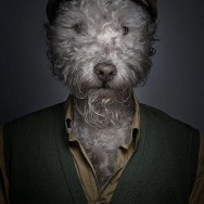 funny-portraits-of-dogs-dressed-like-humans-L-uJEKgS